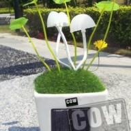 COW_Solar light mushroom desktop2