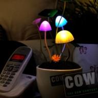 COW_Solar light mushroom grow