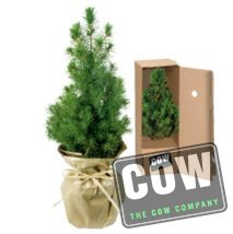 cow_kerstboompje