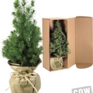 4116 Kerstboompje in kartonnen box