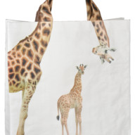 Dierentas giraffe