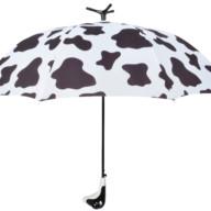 Paraplu koe