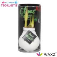 NWF glowz