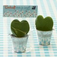 Leafplantje hart