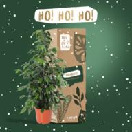 Kamerplant Kerst